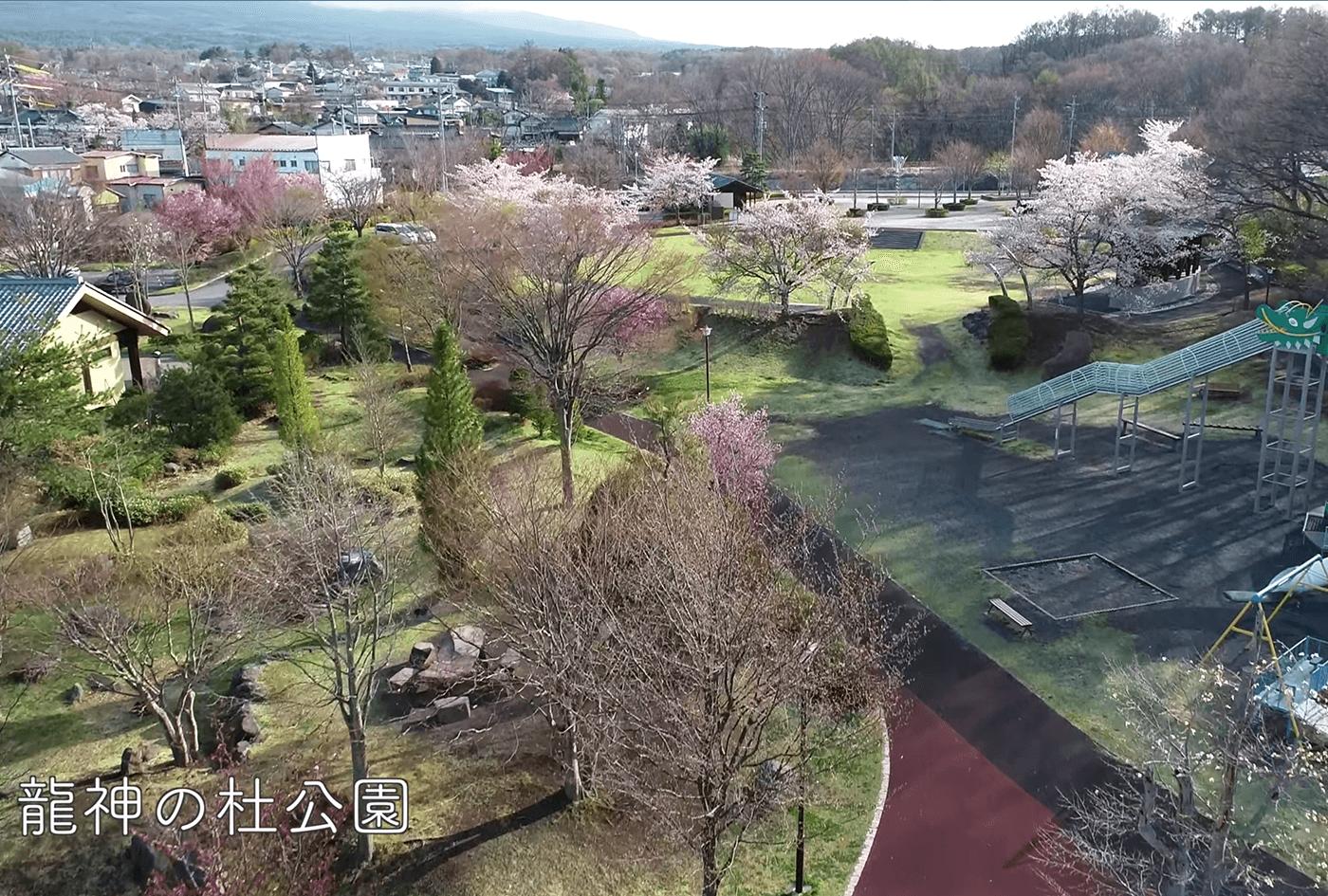 龍神の杜公園の桜